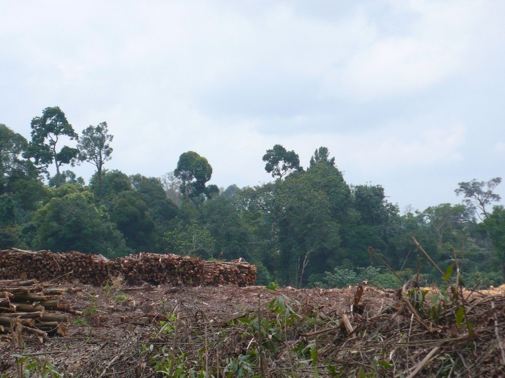 A common approach in forest sector programming has been the use of Payments for Environmental Services (PES) which have frequently been implemented under the REDD+ umbrella.