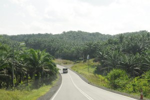 Le Bassin du Congo se trouve donc à un tournant décisif. La question sera donc de savoir est-ce que les acteurs de développement peuvent gérer durablement l'exploitation de l'huile de palme dans une région écologiquement fragile comme le Bassin du Congo?