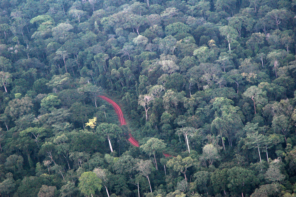 The Congo Basin forests represent the world's second largest contiguous rain forest after the Amazon. Approximately 25-30 million tons of carbon stocks are stored in the Congo Basin forests.