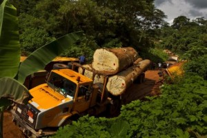 Tropical timber is under scrutiny - but some European timber is also suspect. Photo/BBC