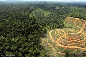 Une concession destinée à la plantation d'huile de palme en Malaisie. Photo Par Rhett Butler.