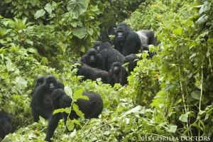 GorillaFamily_highres