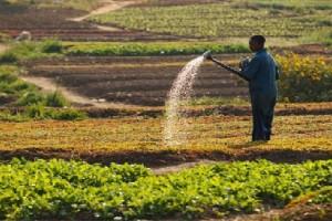 Culture des légumes sur le Plateau des Batéké à Kinshasa