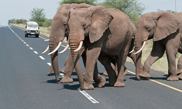 A road near Ngorongoro, Tanzania. A number of proposed development corridors would have a serious impact on wildlife, according to the authors of the study. Photograph: Laura Romin & Larry Dalton/Alamy
