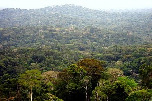 Tropical deforestation is responsible for 10 percent of manmade greenhouse gas emissions every year — but that doesn't include emissions from unnecessarily destructive logging, which also reduces commercial timber stocks and makes forests more prone to burning and clearing, the authors of the study wrote.