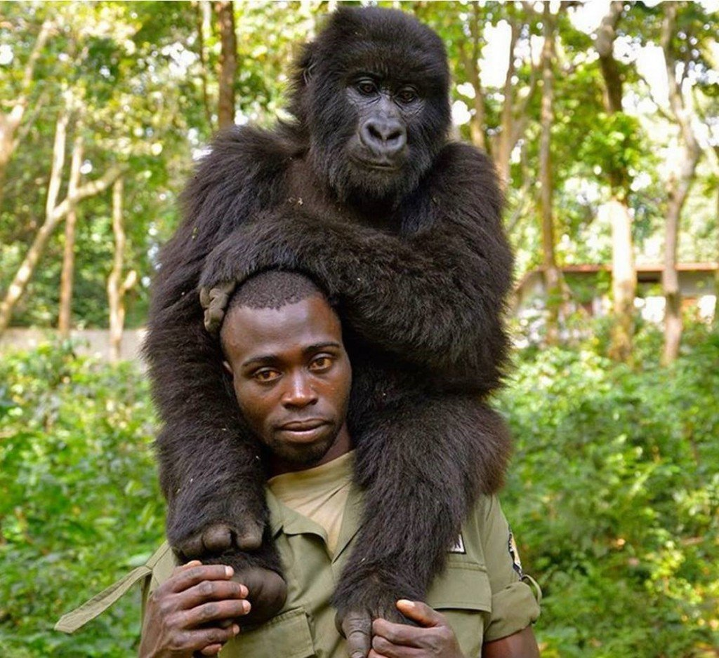 59 percent of rangers surveyed in the study felt they were insufficiently equipped and 42 per cent felt they lacked sufficient training to do their jobs safely and effectively. Photo Credit/Virunga National Park