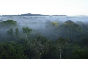 La RDC dispose de 19.441 millions de tonnes de stocks de carbone dans la biomasse forestière vivante.
