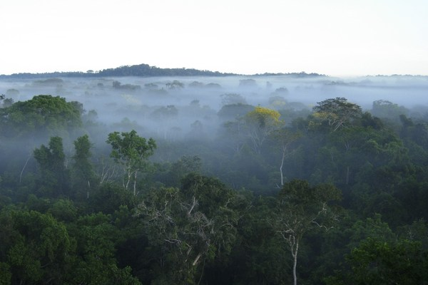 The DRC has 19,441 million metric tons of carbon stocks in living forest biomass.