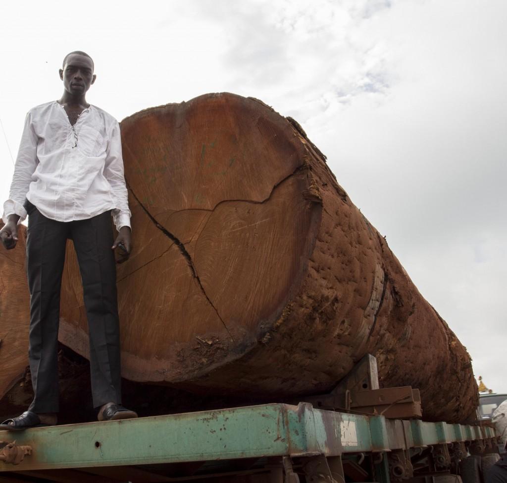 Une enquête de Greenpeace Afrique révèle que le gouvernement congolais a accordé en 2015 trois concessions d'une surface totale de 650.000 ha.