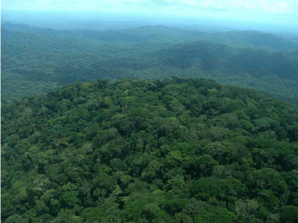 La forêt du Bassin du Congo, 2ème poumon du monde après l'Amazonie