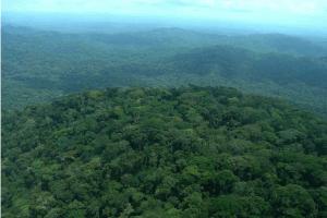 Entre 2001 et 2014, la RDC a perdu 7.977.009 hectares de forêt, la plus grande perte en couvert survenue en 2014.