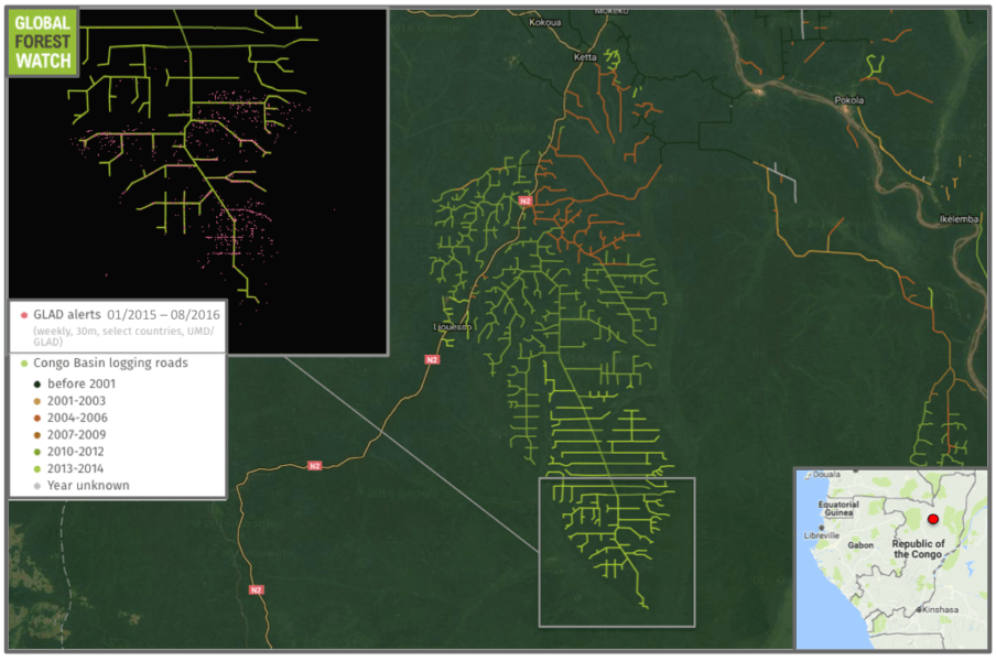 A large network of logging roads is growing in the Republic of Congo. Tree cover loss alerts from the Global Land Analysis and Discovery (GLAD) lab indicate further extensions were added in 2015 and 2016.