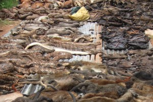 Asorted bushmeat dislayed for sale