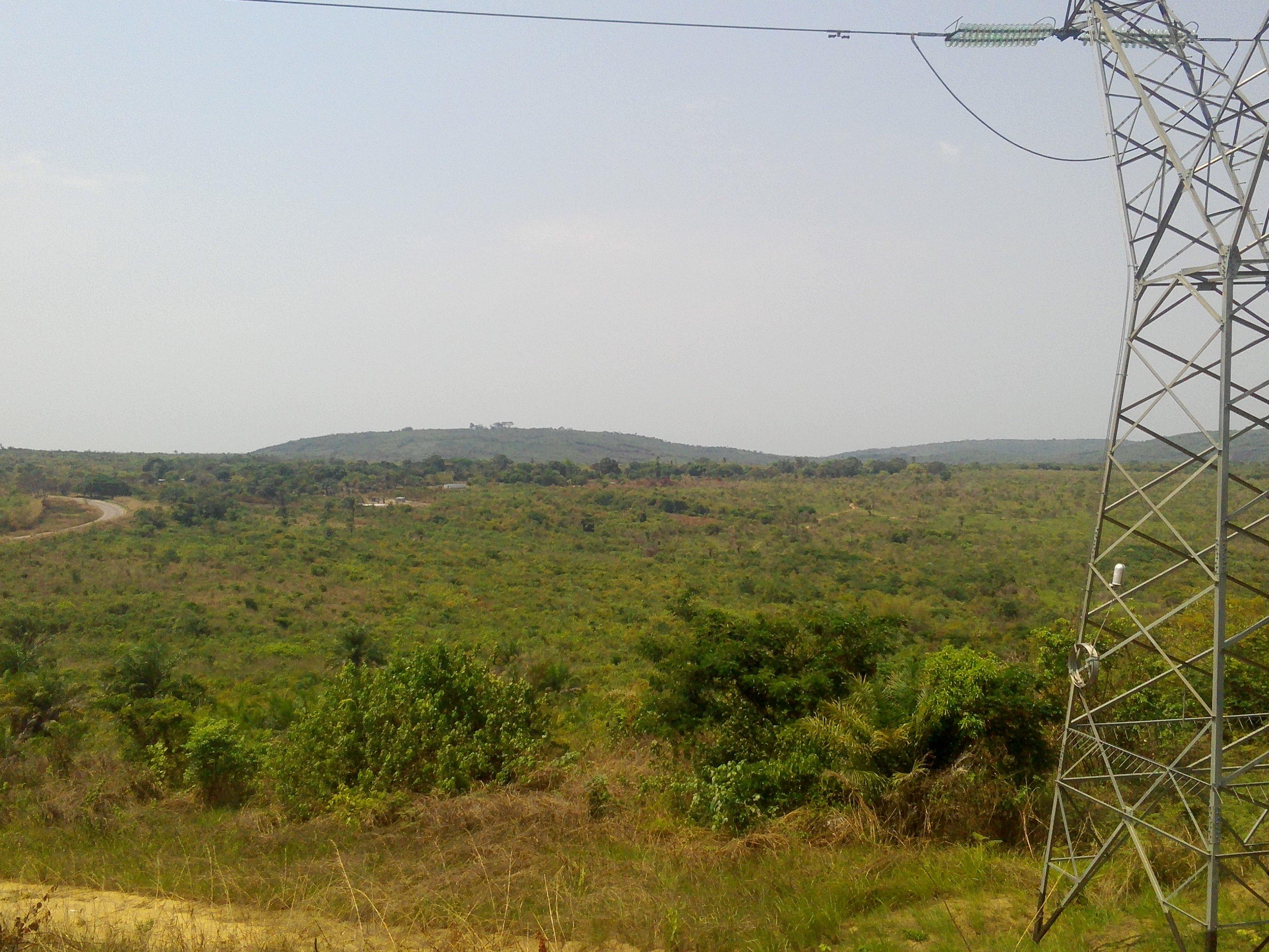 Congo Brazzaville   Le Bois