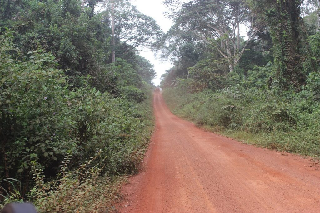 Primarily constructed to facilitate transportation of wood, logging roads in the Congo Basin pose several threats to biodiversity, conservation, and local livelihoods. Photo credit/InfoCongo