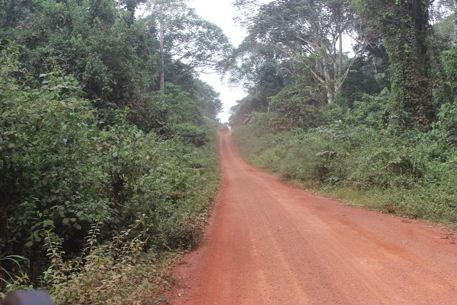 The Road to Destruction? | InfoCongo