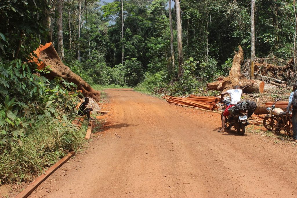 """We do not need these roads, as we do not see any benefits to our community other than to the logging companies and poachers,"" spokesperson for Baka Pygmies"