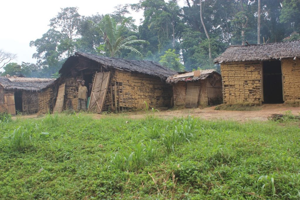 About 1000 Baka, Bakoya Pygmies, and many other Bantu tribes leave in Ngoyla village located in the East Region of Cameroon