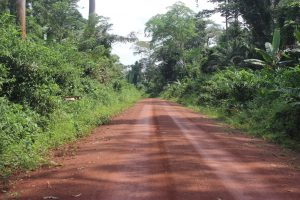 Logging roads which are primarily constructed to facilitate transportation of wood, pose several threats to biodiversity.
