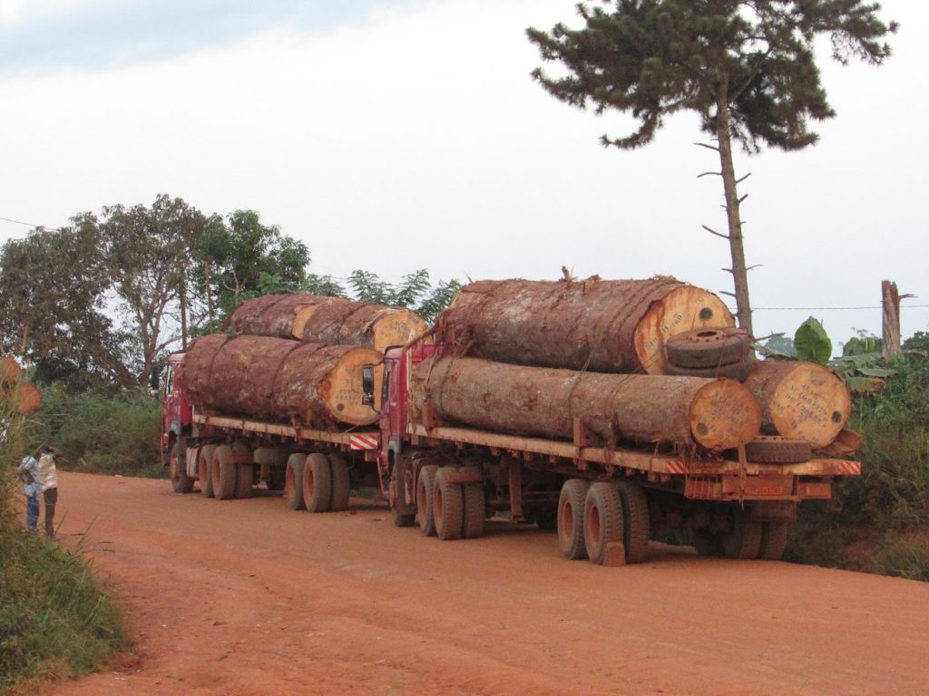 These logging companies are not into anything sustainable, former Mayor of Ngolya
