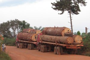 Elected officials have long criticized activities of logging companies saying their primary concern is not the sustainable development of communities.