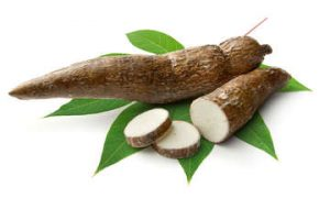 cassavas-and-manioc_article