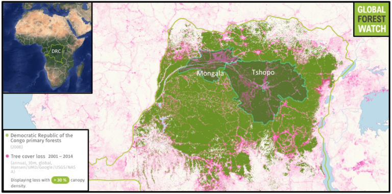 The Congo Basin contains the world's second-largest rainforest, most of which is in the DRC. The 162,936-hectare logging concession awarded to Groupe Les Bâtisseurs du Congo (GBC) is located in Tschopo Province, while the 239,393-hectare APC concession is in Mongala Province. The forest monitoring platform Global Forest Watch shows both provinces had heavy primary forest cover in 2000 but have been affected by deforestation, with data indicating Tschopo lost around 4 percent of its tree cover from 2001 through 2014 and Mongala lost around 8 percent. This loss may be on the rise, with rates nearly doubling for Tshopo between 2012 and 2014 and more than quadrupling for Mongala during that same period.