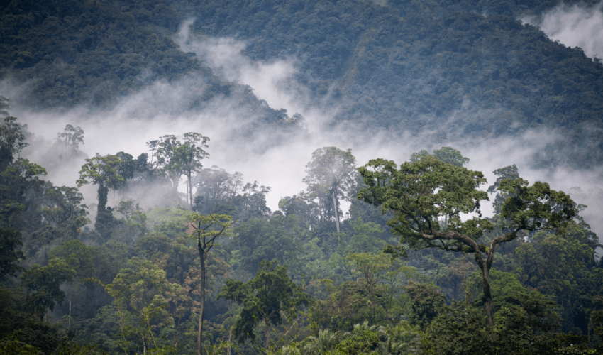 More than 60% of Congo Basin forests are found in DRC
