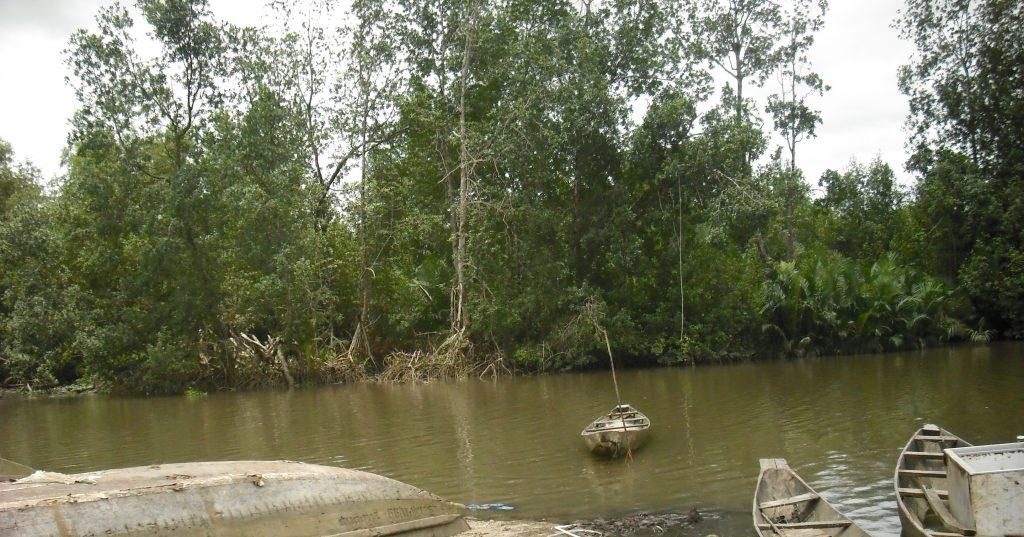La mangrove de Youpwe a Douala:La pression sans cesse croissante sur les ressources se traduisant par la diminution et la disparition de nombreuses espèces floristiques, halieutiques et fauniques a généré des dysfonctionnements de l'écosystème de mangrove causant ainsi des répercussions hydro-morphologique et socio-économique à Youpwe. Photo/Moutila Beni Luc