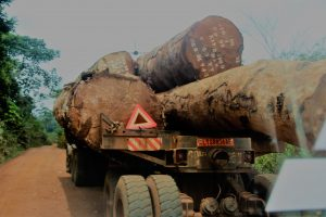 Truck transporting logs in Djoum. Forest communities are demanding clarity in the management of financial fallouts and the creation of an independent body that will ensure transparency and improve governance in a complex and troubled sector Photo credit/Eugene Ndi