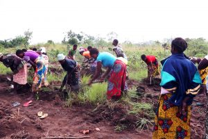 Des femmes agricultrices dans le Mai-Ndombe. Photo : WWF-RDC
