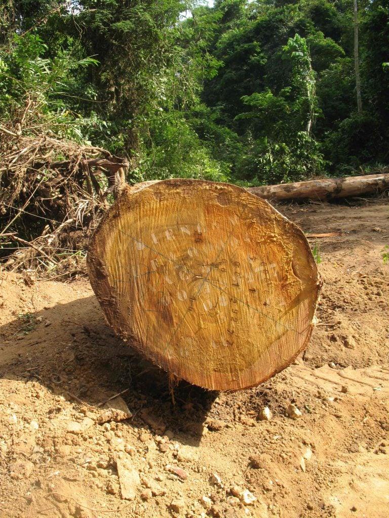 Bille de bois identifIée dans une UFA
