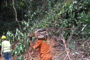 Un agent d'une UFA prêt à scier des billes de bois