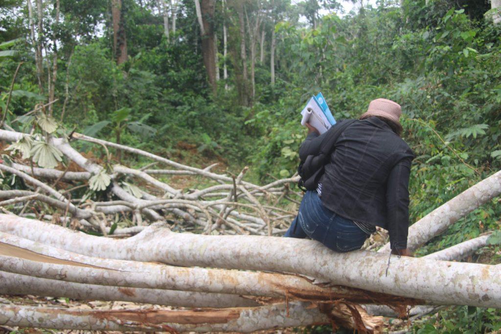 Une forêt de perches dévastée