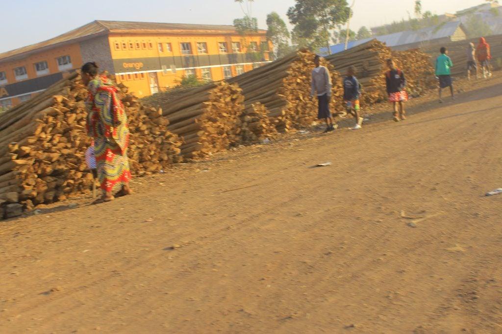 Le marché des jeunes arbres à Butembo