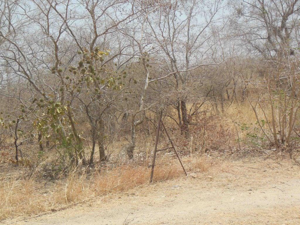 Régénération de la zone aride à l'Extrême-nord du Cameroun