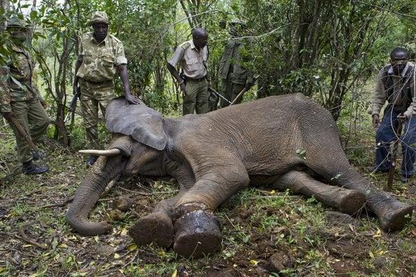 Un éléphant tué au Parc de Lobéké, en RDC