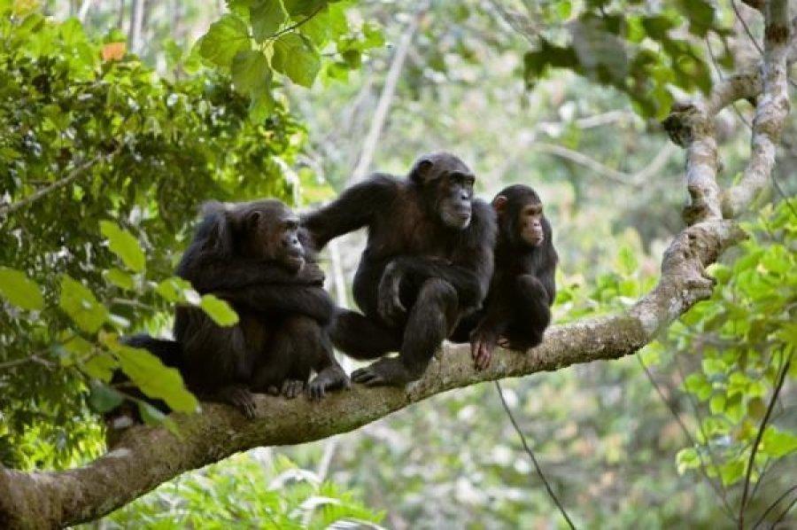 les-gorilles-dans-le-parc-des-volcans