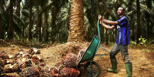 Le prix de l'huile de palme n'a pas évolué depuis environ dix ans alors que les coûts des facteurs de production ont augmenté de manière significative
