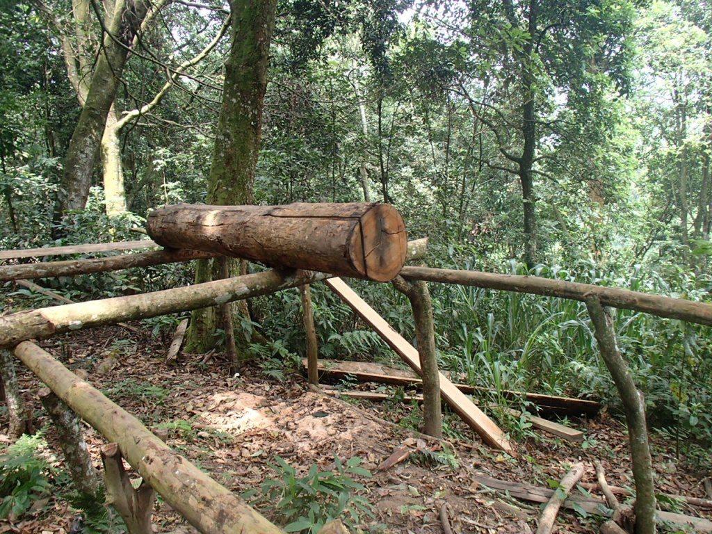 Un poste à sciage des bois en planches installé dans la réserve