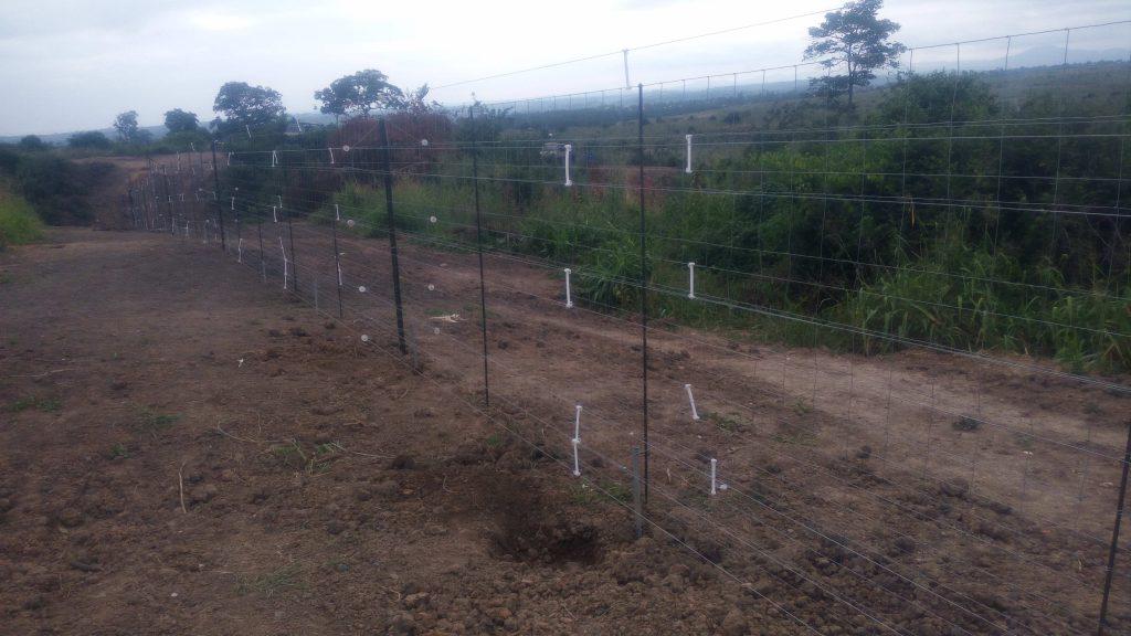 Il y a beaucoup moins de plaintes des paysans riverains depuis que la clôture électrique est en train d'être érigée autour du parc des Virunga. Photo/InfoCongo