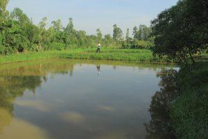 Plusieurs paysans ont aménagé des étangs piscicoles à coté de leurs champs de culture. Nord-Kivu/RD Congo