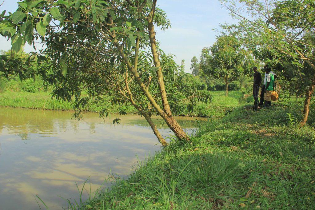 À l'instar des paysans, des étudiants, des entrepreneurs et même des députés commencent à s'intéresser à la pisciculture sur le lac Edouard