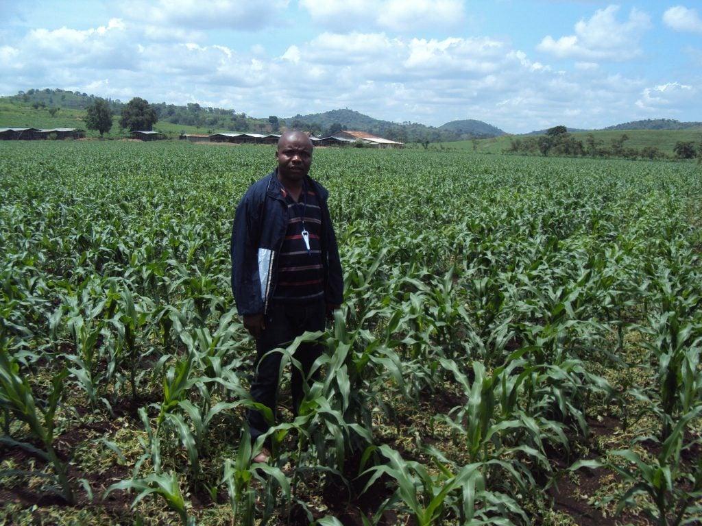 Une pratique culturale utilisée leur permet d'atténuer les effets des trous de sécheresse.