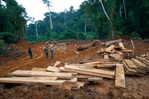 Les villageois utilisent des appareils photo numériques, des smartphones et des pisteurs pour dénoncer l'exploitation illégale dans les forêts denses de Ngwei. FERN / Madeleine Ngeunga