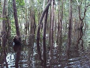 Forêts marécageuses du paysage Lac Télé-Lac Tumba. Photo-Anne Marie Tiani