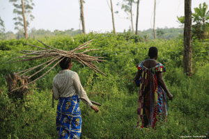 forestsdrc-worldbankblog