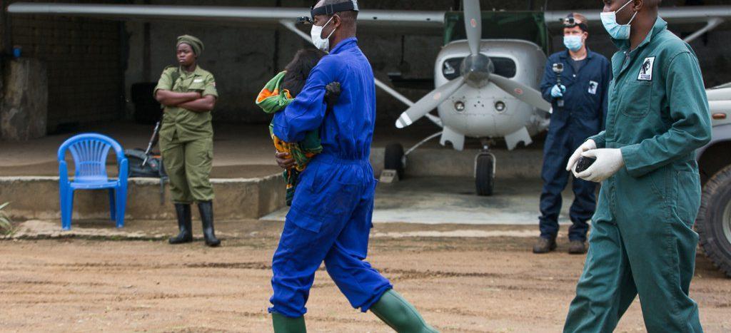 Cinq écogardes et un chauffeur du Parc national ont été tués lors d'une embuscade des miliciens Mai-Mai