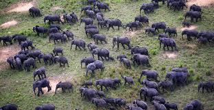Parc national de la Salonga en RDC. Photo/WWF