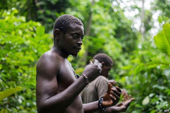 Des membres de la communauté des Pygmées Bagyeli exposent leur équipement de chasse, le 26 mai 2017 dans la région de Kribi au Cameroun.